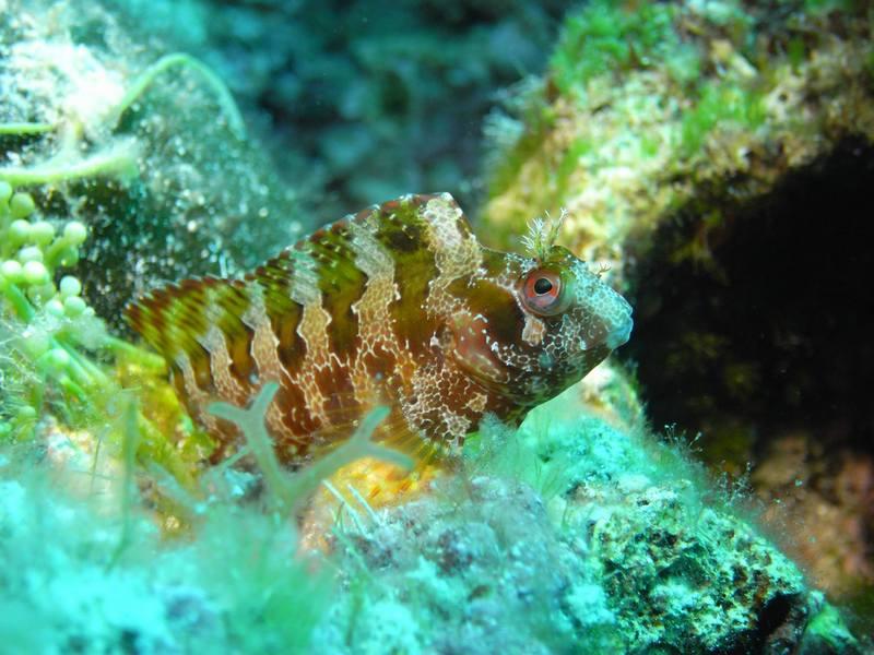 Discover Magic Scuba Diving